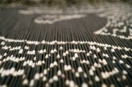 """Quills from an African porcupine arranged to evoke Michelangelo's """"The Creation of Adam"""""""